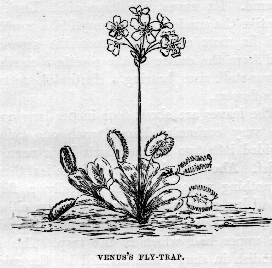 Plant Traps and Decoys: Chapter VII